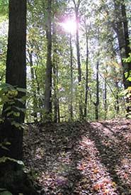 Backus Woods, Norfolk, Ontario (Photo by NCC).