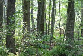 Backus Woods, Ontario (Photo by Mary Gartshore)