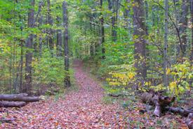Backus Woods, Ont. (Photo de CNC)