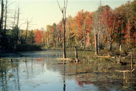 NCC's first project was Cavan Swamp and Bog in Ontario (Photo by NCC)
