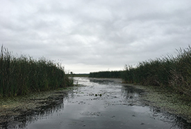 Puttering around the Brighton wetland shoreline with Ducks Unlimited Canada. (Photo by NCC)