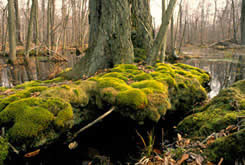 Carolinian forest, Ontario (Photo courtesy of Earth Images Foundation)