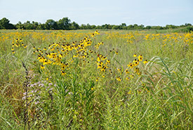 Meadows and forests are habitat for coyotes and red foxes (photo by NCC)