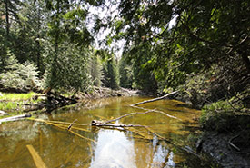 Crane River Tract, ON (Photo by NCC)