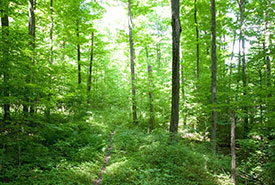 Forest trail, Creemore, ON (Photo by NCC)