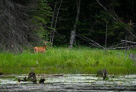 Deer at Hastings Wildlife Junction. Photo by Chelsea Marcantonio