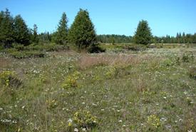 Little bluestem grass, Carden Alvar, Ontario (Photo by NCC)