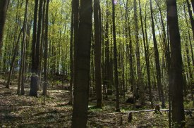 Love Mountain Nature Reserve, Happy Valley Forest, ON (Photo by NCC)