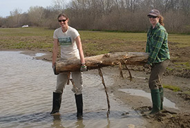 NCC staff add logs to restored wetland, Pelee Island, ON (photo by NCC)