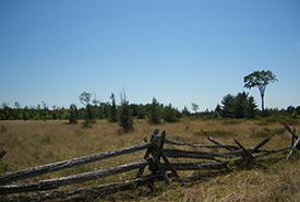 Alvar North Bear dans l'aire naturelle de l'alvar Carden, Ont. (photo de CNC)