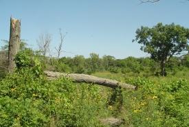 Savanna on the Pelee Island Alvar, Ontario (Photo by NCC)