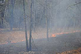 Prescribed burn, Hazel Bird, Ontario on May 12, 2014 (Photo by NCC)
