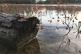 Restored wetland, Pelee Island, ON (Photo by NCC)