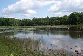 Sandy Island coastal wetland, Ontario (Photo by NCC)