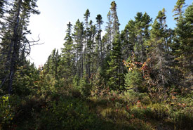 Forests in Giddings property, Percival River, PEI (Photo by Mike Dembeck)