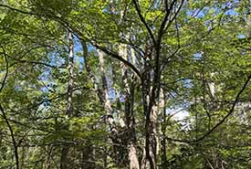 Elizabeth Walsh Nature Reserve, PEI  (photo by NCC)