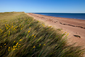 Conway Sandhills, Prince Edward Island (Photo by John Sylvester)