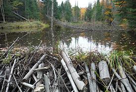 Beaver dam, Ottawa Valley (Photo by NCC)