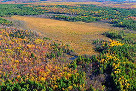Covey Hill peatland (Photo by Mark Tomalty)
