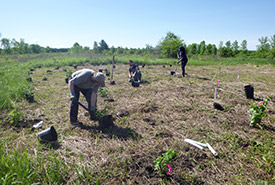 Tree-planting volunteer work at the Grondines swamp (Photo by NCC)