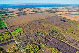 Large Tea Field, Montérégie, QC  (photo by Mark Tomalty)