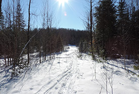 Alfred-Kelly Nature Reserve, QC (Photo by NCC)