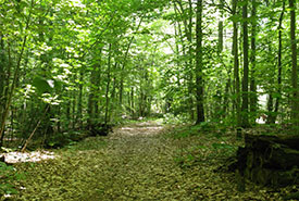 Réserve naturelle de la Forêt-de-Senneville, Québec (Photo de CNC)