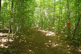 Réserve naturelle du Chemin-Saint-Georges, Rigaud, Québec (Photo de CNC)