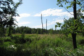 Wetland and forest protected by NCC in Bristol, Quebec (Photo by NCC)