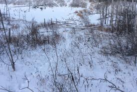 Animal tracks on Meeting Lake 03, SK (Photo by NCC)