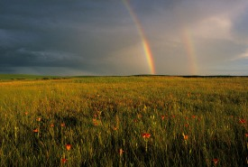Saskatoon Prairie Natural Area, Saskatchewan (Photo by Branimir Gjetvaj)