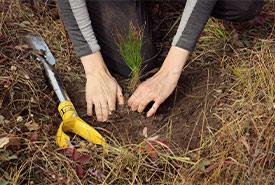 Tree Planting at Meeting Lake 03 (Photo by NCC)