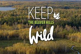Keep the Beaver Hills Wild