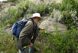 Gus Yaki identifying plants and removing invasive species (Photo by Angela Waldie)