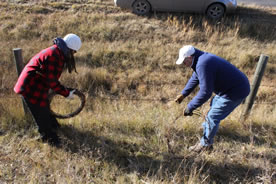 Conservation Volunteers removing barbed wire to allow better passage for wildlife (Photo by Natalie Trofimencoff)