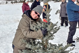 Volunteer with tree at Christmas trees for conservation CV event (Photo by NCC)