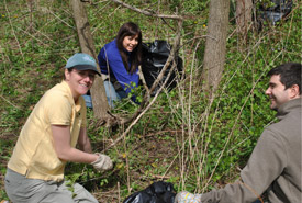 NCC staff members remove invasive garlic mustard from the Happy Valley Forest, Ontario (Photo by NCC)