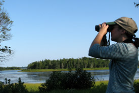 Birding at the Tabusintac Estuary, NB (Photo by NCC)