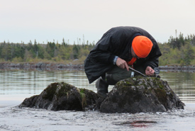 Troy McMullin, lichenologist from the University of Guelph, takes a lichen sample from a rock. (Photo by NCC)