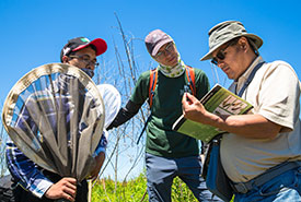 NCC conservation technician, Aidan O'Brien, helps volunteers identify various species at the Minesing Wetlands Dragonfly Count (Photo by NCC)