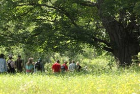 Tour participants walk by a mature maple tree on the Goldie Feldman Nature Reserve. (Photo by NCC)