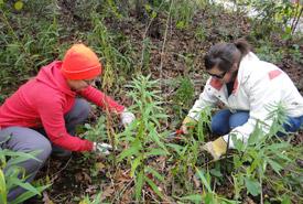 Conservation Volunteers Kristina Domsic and Renee Wazonek remove invasive buckthorn from savannah habitat, Ontario (Photo by NCC)