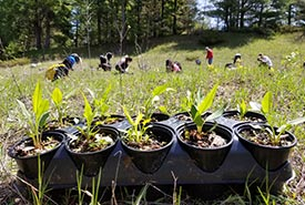 Wildflowers planted by volunteers, Hazel Bird Nature Reserve, ON (photo by NCC)