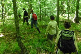 Volunteers looking for salamanders (photo by Serge Tanguay)