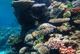 Coral reef (Photo by Wise Hok Wai Lum/Wikimedia Commons)