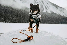Sumi the adventure dog (Photo by Dawa Parchang)
