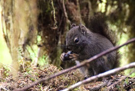 A squirrel at Kumdis River Conservation Area (Photo by NCC)