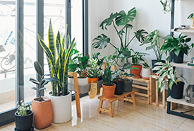 House plants (Photo by Huy Pahn)
