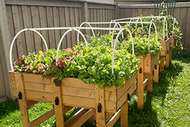 Garden boxes in late August (Photo by NCC)