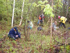 Conservation Volunteers pulling invasive dog-strangling vine (Photo by NCC)